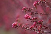 Pink Tree Photo