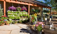 Hanging Baskets in Eagle Crest Nursery