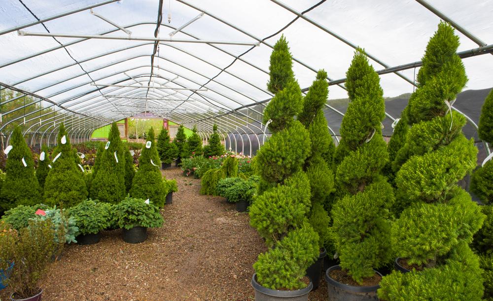 Trees in Eagle Crest Nursery